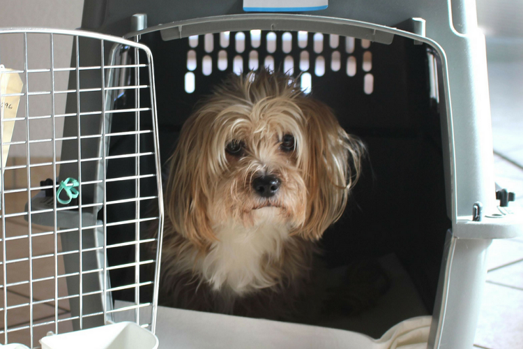 The Biggest Do's and Don'ts When Flying with Your Furry Pal