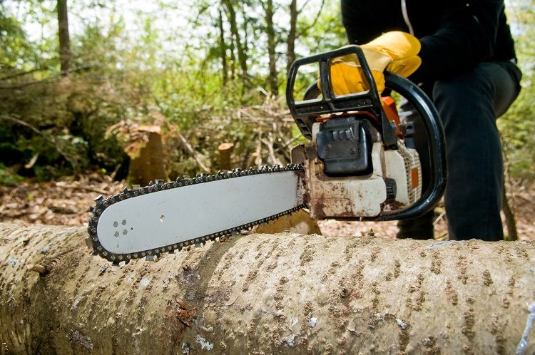All the Reasons Why You Should Choose a Reliable Tree Cutting Company