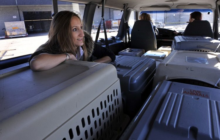 Moving with Pets: How a Pet Ground Transport Service Can Make Things Easier