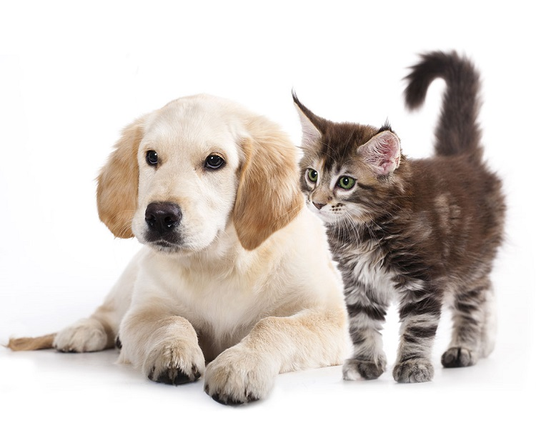 pet transport Melbourne