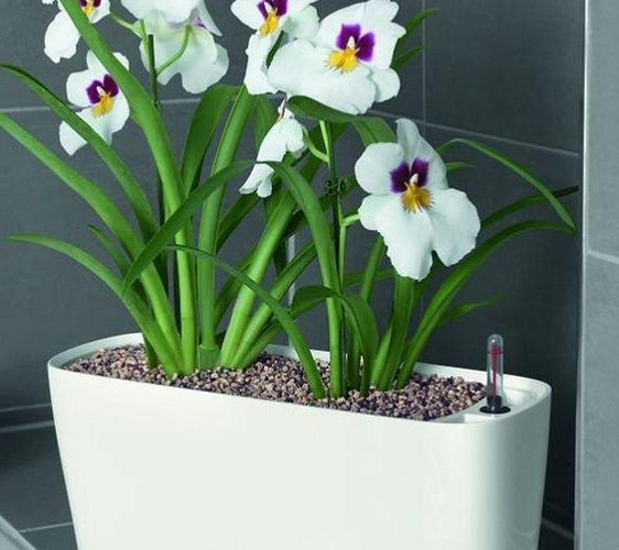 Self Watering Pots For the Lazy