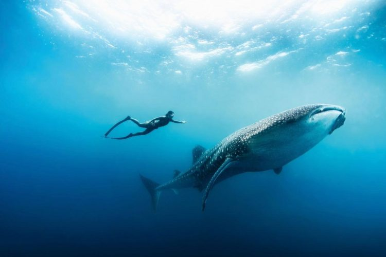 The Gripping Story of Freediving To Turn a Freediver Out of You