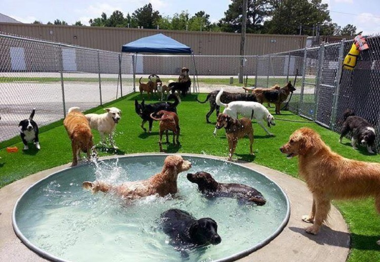 TURN YOUR BACKYARD IN A DELIGHTFUL DOGGY PARADISE