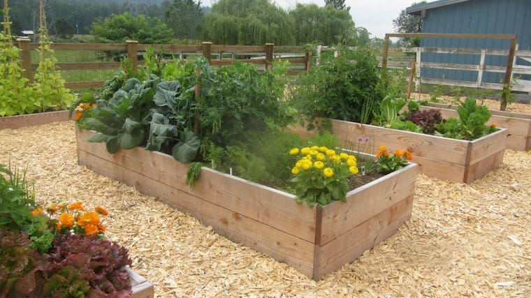 chips with raised garden boxes with flowers