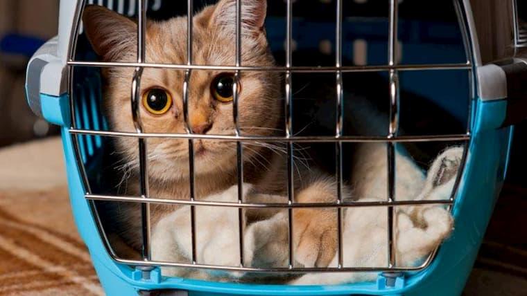 cat inside her carrier