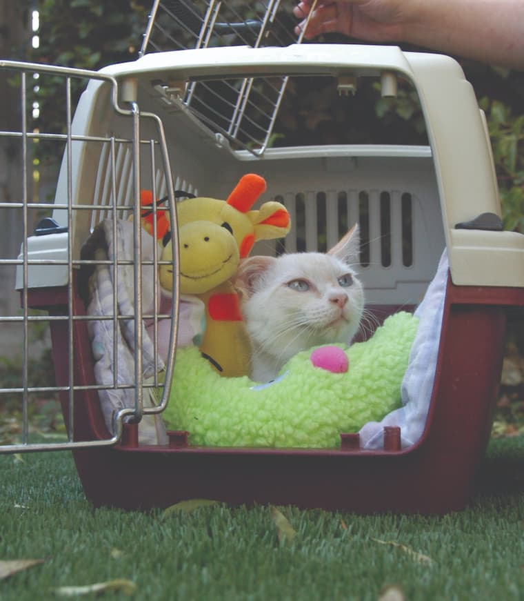 cat with toys inside cat carrier