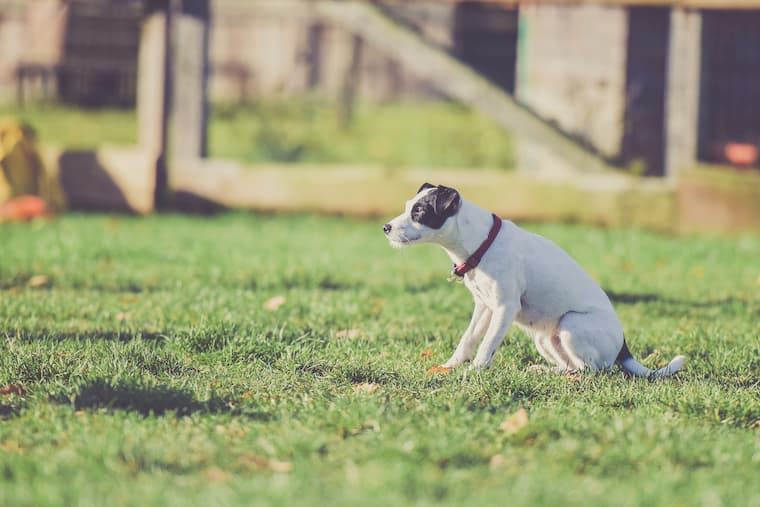 dog standing on a grass in the garden