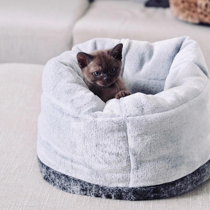Cat Bed Chinchilla